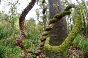 Twisty Vines by lamorth-the-seeker