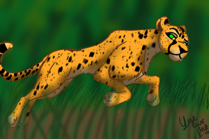 Cheetah by yue-luv-art