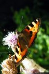Butterfly III by andyrogerson