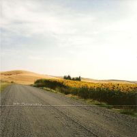 The Last Sunny Day Dirt Road by Die-Dulci-Fruere