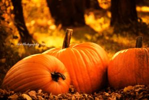 Memories of Last Fall by PhotographsByBri