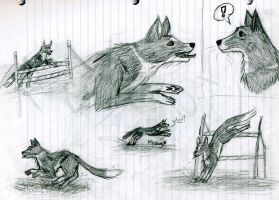 Border Collie Sketches by kulapti