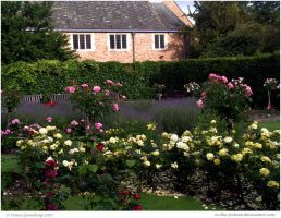 Old English Rose Garden by In-the-picture