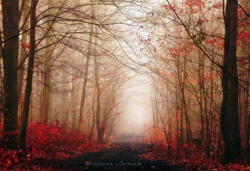 Misty Fall by Justine1985
