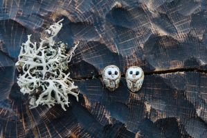 Tiny Barn Owls Stud Earrings by Lavenderwitch