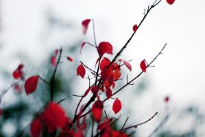 autumn red III by Noise-Less