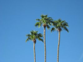 Scottsdale Palms by NerdStitch