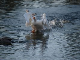 the flying goose by Claudia008