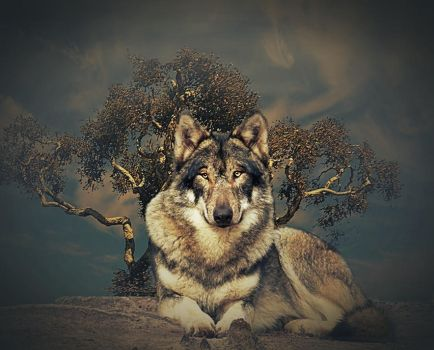 Eyes of the Wolf by poisen2014