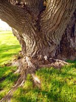 Trunk by POETRYTHROUGHLENS