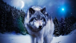 Wolf in the winter by Alkaa-Wolf