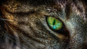 Cat's eye HDR by KrisSimon