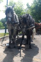 Cart Horses 04 by Stock-gallery