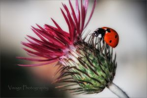 Lady and the Thistle by GJ-Vernon