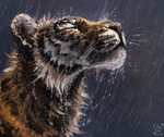 Wet tiger study by doosead