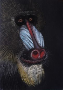 Mandrill (male) by GwendolynWolters