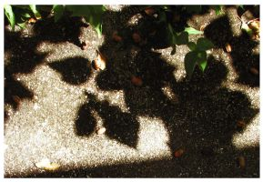 Leaf Shadow by Polly-Stock