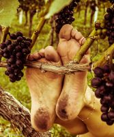 Grapes by 365feet