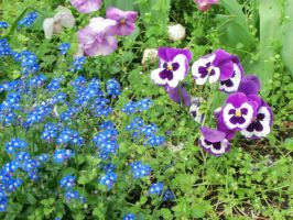 Pansies and Forget-me-nots by Mecarion