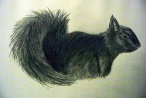 squirrel sketch by pie-lord