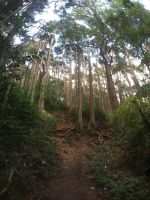 Judd Trail, Honolulu, Hawaii, US by stuckart