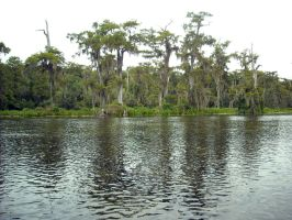 Wakulla River by Eco-Cate