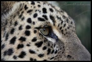Eye Spy II by Alannah-Hawker