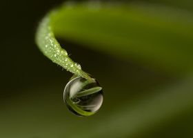 Natural Refraction 3 by Alliec