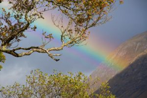 Spectrum through the Trees by CumbriaCam
