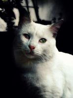 The Cat that Never Smiled. by Catist