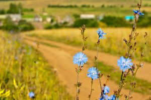 Blue flowers and the village by Sulde