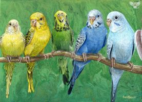 Budgie Band by ART-fromthe-HEART