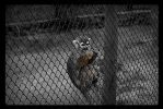 Zoo Prison 01 by underbrager
