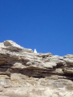 Perched Seagull by plutoplus1