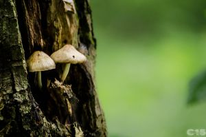 Mushrooms 8 by case15