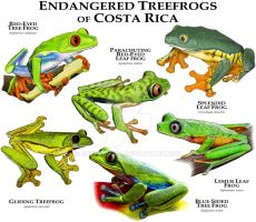 Endangered Treefrogs of Costa Rica by rogerdhall
