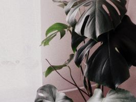 in my mother's house: philodendron by snusmumrikenn