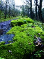 FOLLOWING THE GREEN MOSSY TRAIL by trevj