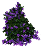 Purple Flowery Bush PNG.. by WelshDragonStockNArt