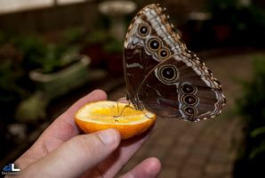 Butterfly Moments...offering by imonline