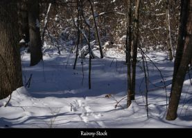Winter woods-STOCK by Rainny-Stock