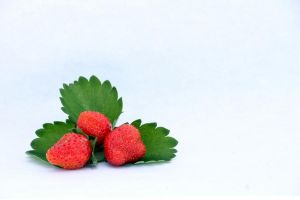 Strawberry lightbox study - 4 by chris-stahl