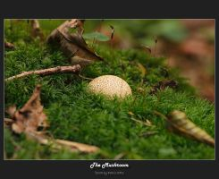 The Mushroom by oetzy