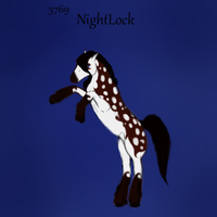 #5769 Nightlock by Night-angel-stable