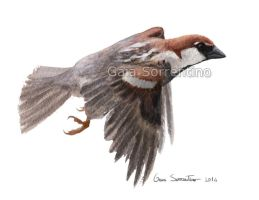 Sparrow in flight by makangeni