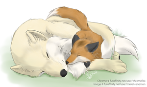 Afternoon Nap by MetalRenamon