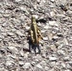 First Grasshopper Photo by PharaohAtisLioness