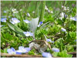 Blue and Green and a Feather by CarinaMijne