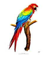 Macaw Parrot - Highlighter Art by SlotsArtStudio