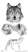 Wolf practice by MonsieArts